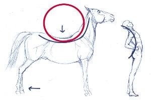 swayback-drawing-200-300